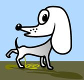 White dog. Royalty Free Stock Images