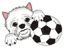 White dog and a ball Royalty Free Stock Image