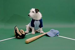 White dog with baseball gear Stock Images