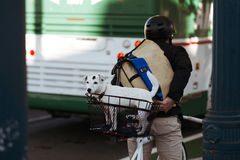 White dog in the basket at the bicyclist Stock Photos
