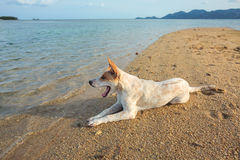 White dog. On the beach Stock Images
