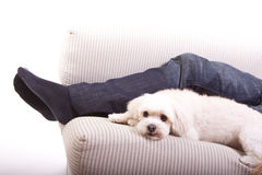 A white dog Stock Photography