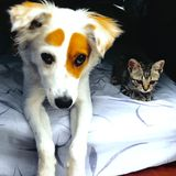 White dog and black cat royalty free stock photo