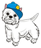 White dog in blue cap Stock Images
