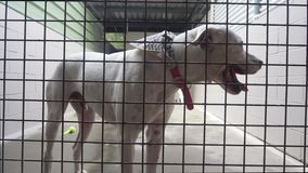 White dog close up in animal shelter waiting for adoption stock video footage
