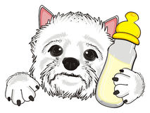 White dog with drink Royalty Free Stock Images