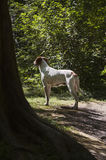 White dog. Found a ray of sunshine in the dark forest Stock Photos