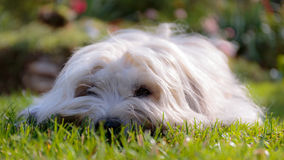 White Dog in Garden Stock Photo