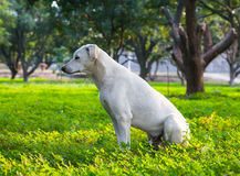 White dog in the garden Stock Image