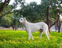 White dog in the garden Stock Photography