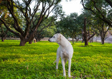 White dog in the garden Stock Photo