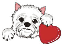 White dog with heart Royalty Free Stock Photos