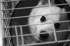 White Dog Inside the Cage Stock Image