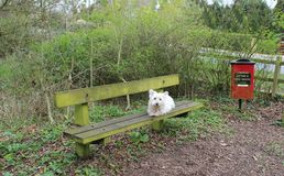 White Dog and Litter Bin in Woods Royalty Free Stock Photos