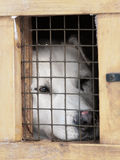 White dog in the little box cage Stock Photography