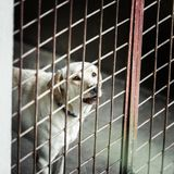 Dog locked in a cage. White dog locked in a cage royalty free stock image
