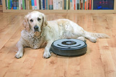White dog is lying next to the robotic vacuum cleaner Royalty Free Stock Photos