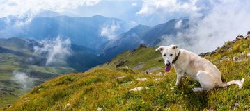 White dog in the mountains. Above the clouds Royalty Free Stock Photo