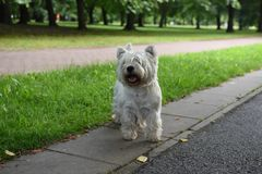 White dog in the park royalty free stock photos