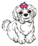 White dog with pink bow Stock Photography