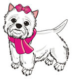 White dog in pink clothes Royalty Free Stock Images