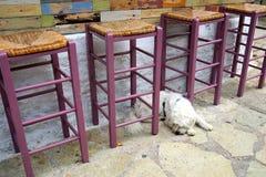 White Dog and Purple Bar Stools Stock Photo