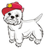 White dog in red cap Stock Image