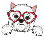 White dog with red glasses Royalty Free Stock Photography