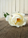 White dog rose. Rose on the wooden porch of cottage Royalty Free Stock Photos