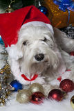 White dog in Santa hat with gift boxes under Christmas tree Stock Photo