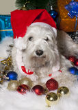 White dog in Santa hat with gift boxes under Christmas tree Stock Image