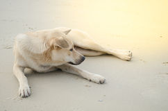 White dog. Dog is sitting on the beach Royalty Free Stock Photo