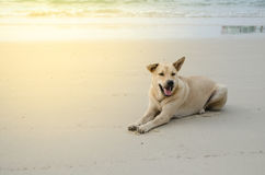 White dog. Dog is sitting on the beach Stock Photo