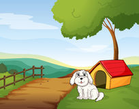 A white dog sitting in front of a dog house Royalty Free Stock Photography