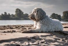 White Dog Sitting on Seashore Stock Photo