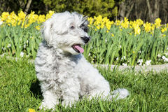 White dog sitting in a spring garden Stock Image