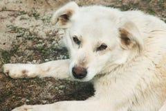 White dog on the street stock photos
