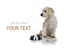 White dog waiting for food Royalty Free Stock Image