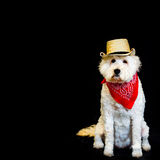 White dog wearing Cowboy attire. Fun image of white dog against black background wearing straw cowboy hat and red bandanna Stock Images