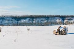 White dog in winter field Stock Images