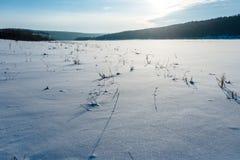 White dog in winter field Stock Photo