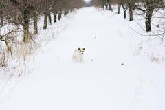 White dog in the winter garden. Snowy winter stock image