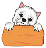 White dog and wooden plate Stock Images