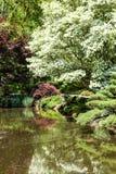White Dogwood Over Lake In Garden Stock Photography