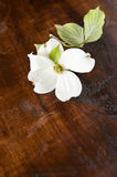 White Dogwood Wood Background Stock Photo