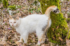 White domestic cat standing by the tree in the woods Stock Photography