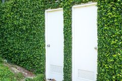White door with a stone wall covered with ivy. Two white door with a stone wall covered with ivy Royalty Free Stock Photography