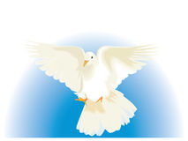 White Dove. In flight with fade blue background vector illustration