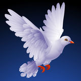 White dove. Vector white dove on the black background Royalty Free Stock Image
