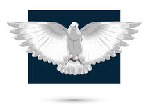 White dove,  Stock Images